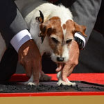 Uggie-Getting-His-Paw-Print-On-The-Walk-Of-Fame-150X150