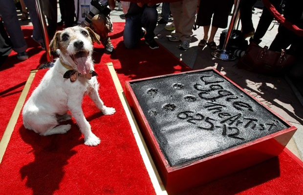 Uggie Getting His Paw Print On The Walk Of Fame