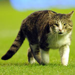 Cat invades pitch at Anfield Premiere League football match