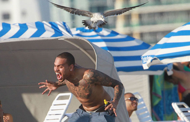 Chris Brown losing it with a flock of Seagulls