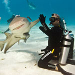 Shark high fiving a Scuba Diver
