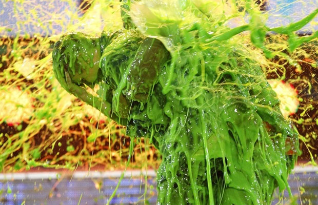 Justin Bieber Being Slimed At The Kids Choice Awards