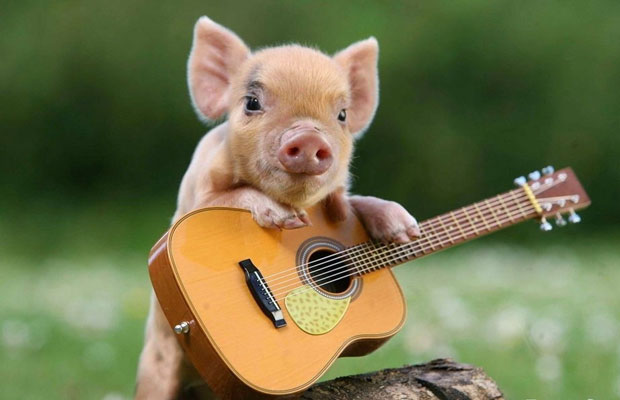 Piglet playing an acoustic guitar