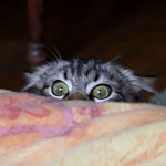 Funny cat staring over bed