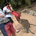 tourist-mugged-by-monkeys-150X150